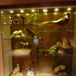Mistretta Museo Fauna