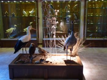 Mistretta Museo Fauna  (2)