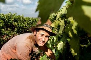 Viticultori Mandrarossa