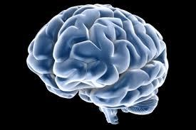 cellule staminali cervello