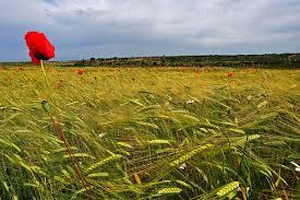 coltivazioni agricole