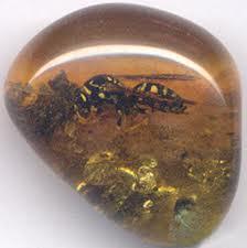 fossili in ambra