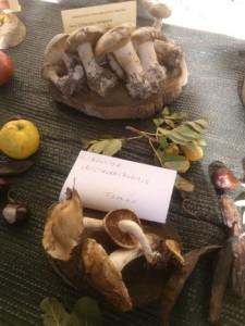 funghi mostra