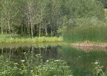 lago-campanito