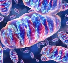 malattie genetiche mitocondriali