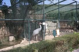 uccelli di Villa d'Orleans