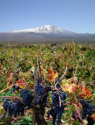 vino uva etna